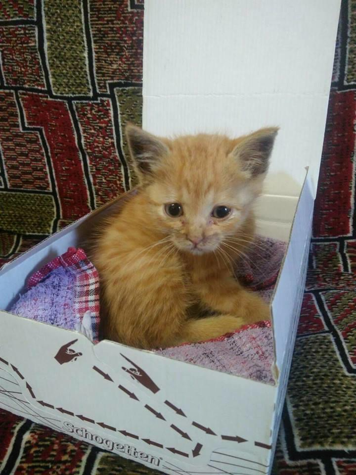8 серпня відзначають міжнародний день кішок