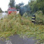 На Донеччині через сильні пориви вітру падають дерева, знеструмлені деякі райони міст та немає води в Авдіївці