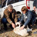 Врятувати лебедя: Як бахмутянка зібрала гроші та допомогла вижити білокрилому Василю з місцевого озера (Відео)