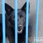 Жительница Донецкой области подарила полицейским 12 собак, которые будут защищать население от угроз (ФОТО)