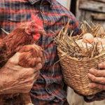 """""""Торецькі курчата"""": Як фермер відкрив птахоферму у прифронтовому селищі"""
