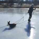 В Краматорске спасатели вытащили косулю, застрявшую посреди озера