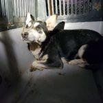 В Дружківці волонтери-рятувальники витягли із колодязя собаку, який жив там півтора року (Фото)