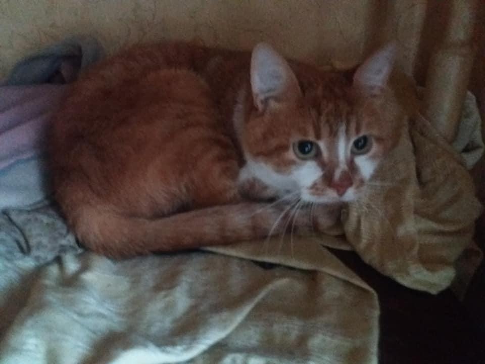 В Бахмуті шукають господарів для осиротілих кішки та собаки