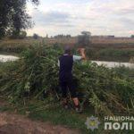 Славянские полицейские сожгли почти гектар конопли (ФОТО)