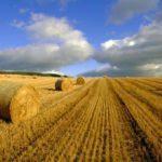 Наступного року в Україні планують запровадити ринок землі