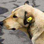 В Краматорске презентовали пункты стерилизации для бездомных животных