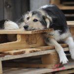 Бахмут подасть заявку на побудову пункту стерилізації безпритульних тварин