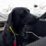 Чотири лапи й гострий нюх: як виховують собак у кінологічному центрі в Слов'янську (Репортаж)