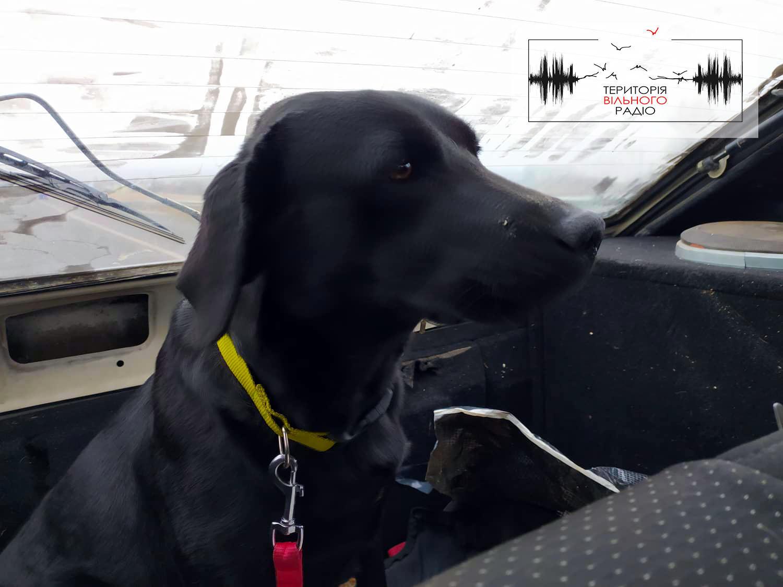 Як тренують собак у кінологічному центрі в Слов'янську