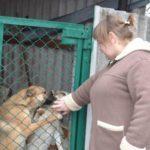 В Мирнограді волонтерка збирає кошти на відокремлену базу для безпритульних тварин