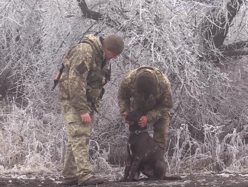 Військові медики 5 годин оперували пораненого фронтового собаку. І врятували