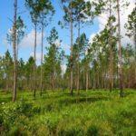 20 березня по всій Україні посадять 1 млн дерев. 1000 з них — в Бахмуті