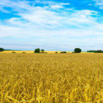 Ринок землі на Донеччині. Що фермери регіону думають про закон