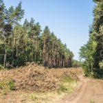 В Лиманській ОТГ вирощуватимуть саджанці дерев за шведською технологією
