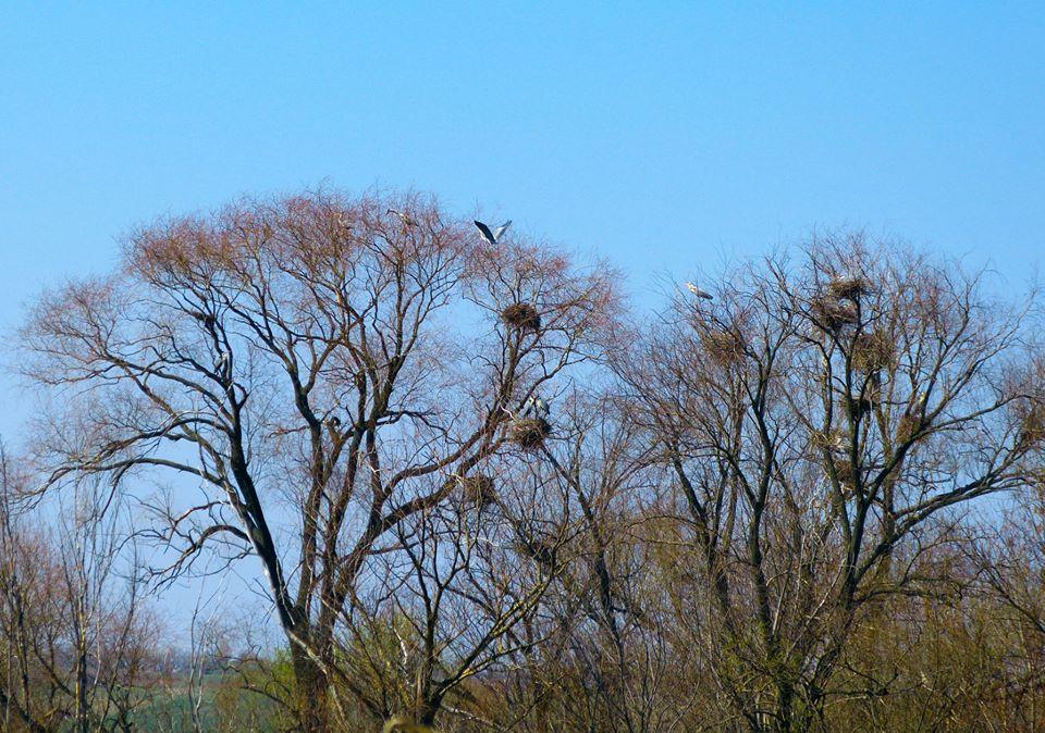 дерева гнізда птахів