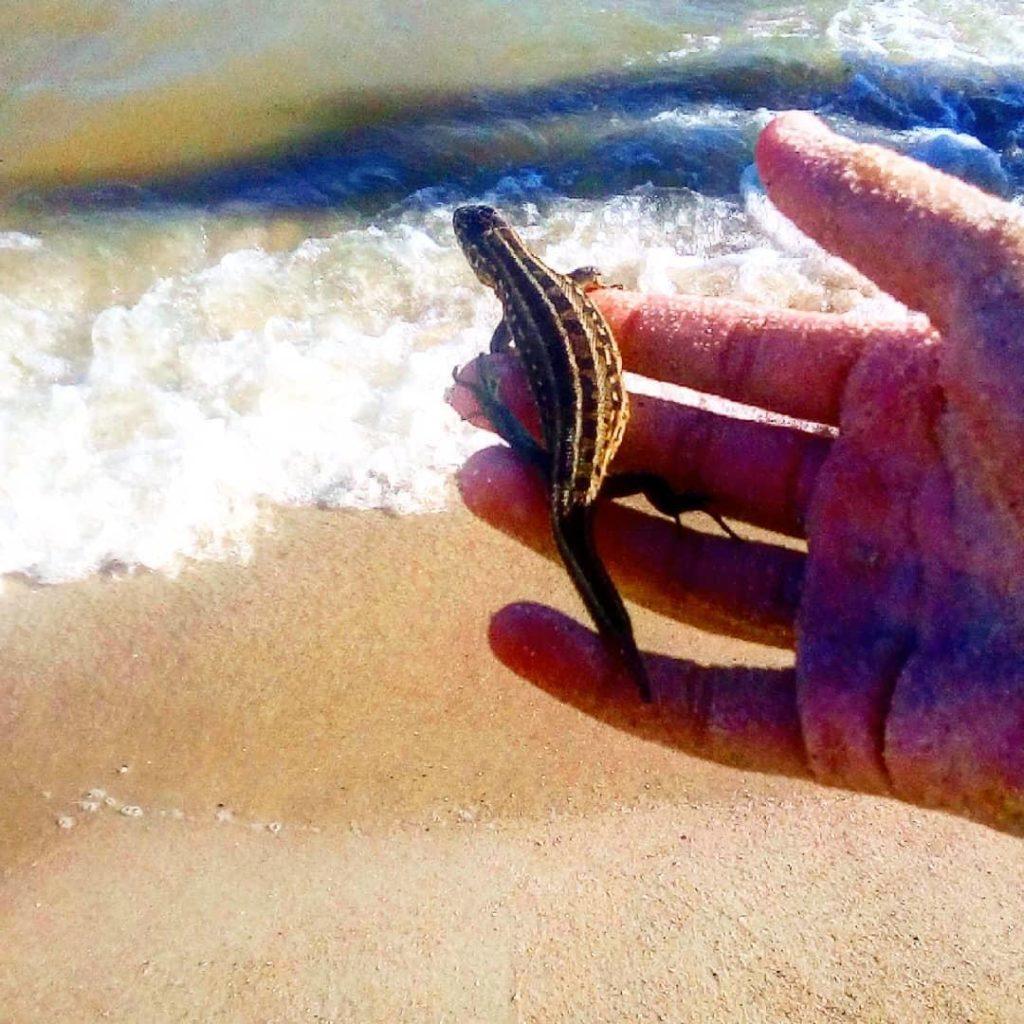 ящірка море