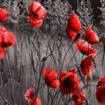 Від 50 до 85 млн загиблих: 8 травня світ вшановує жертв Другої світової війни
