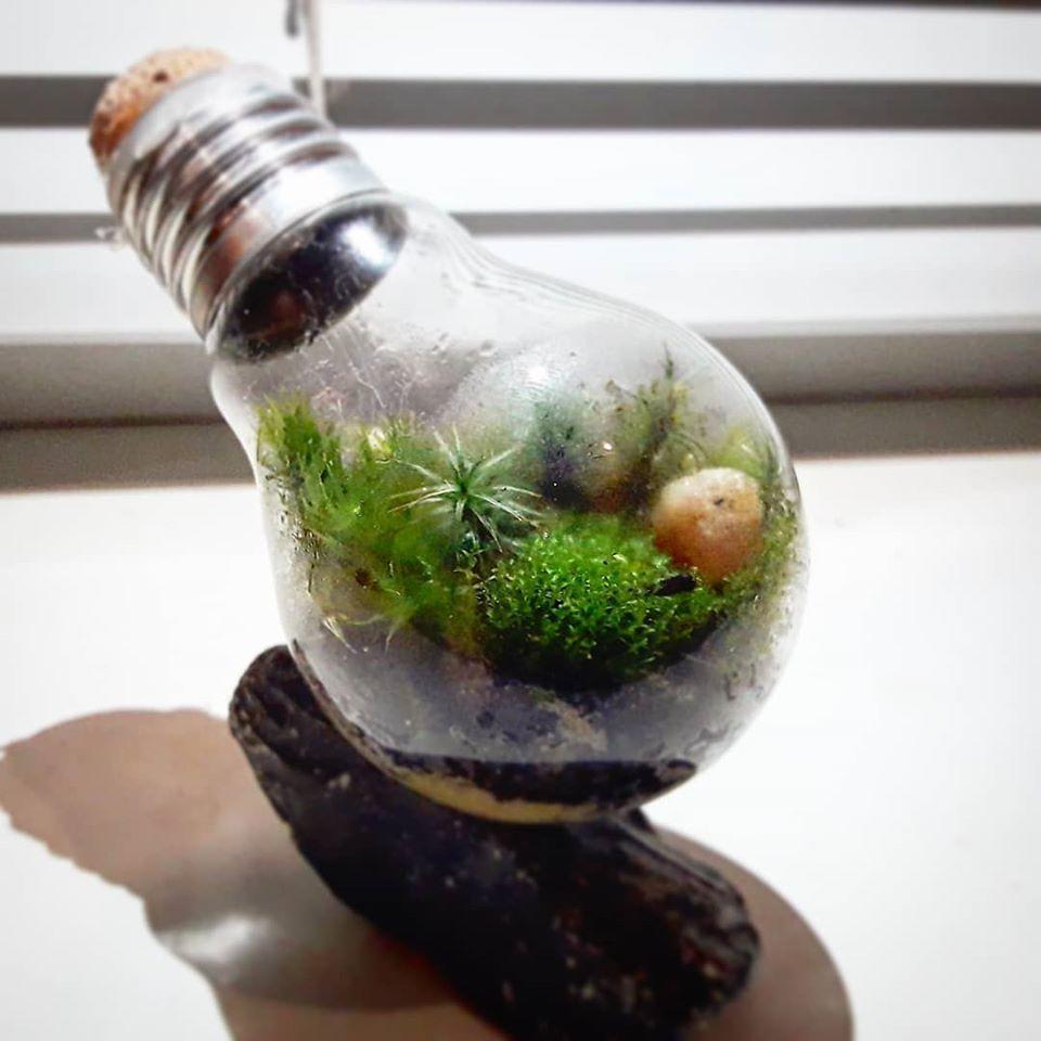 рослини в лампочці