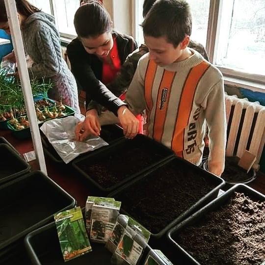 школярі кабінет праці вирощування рослин у лотках