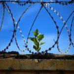 В полоні в ОРДЛО перебувають 235 українців, 112 ㅡ незаконно утримують в тюрмах РФ та в Криму