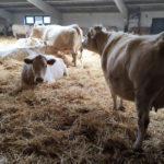 У фермерів на підконтрольній Донеччині з початку року стало менше корів та домашніх птиць