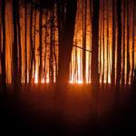 """""""Розгублені тварини бігли з пожежі"""". Рятувальник з Бахмута про пожежі на Луганщині і свою роботу загалом (Монолог)"""