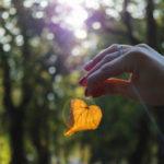 Шепіт листя, вітру та звуки дощу: як виглядає Бахмут в середині осені (Фото, звуки)