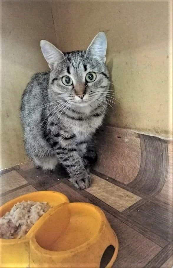 безпритульна кішка з Луганщини