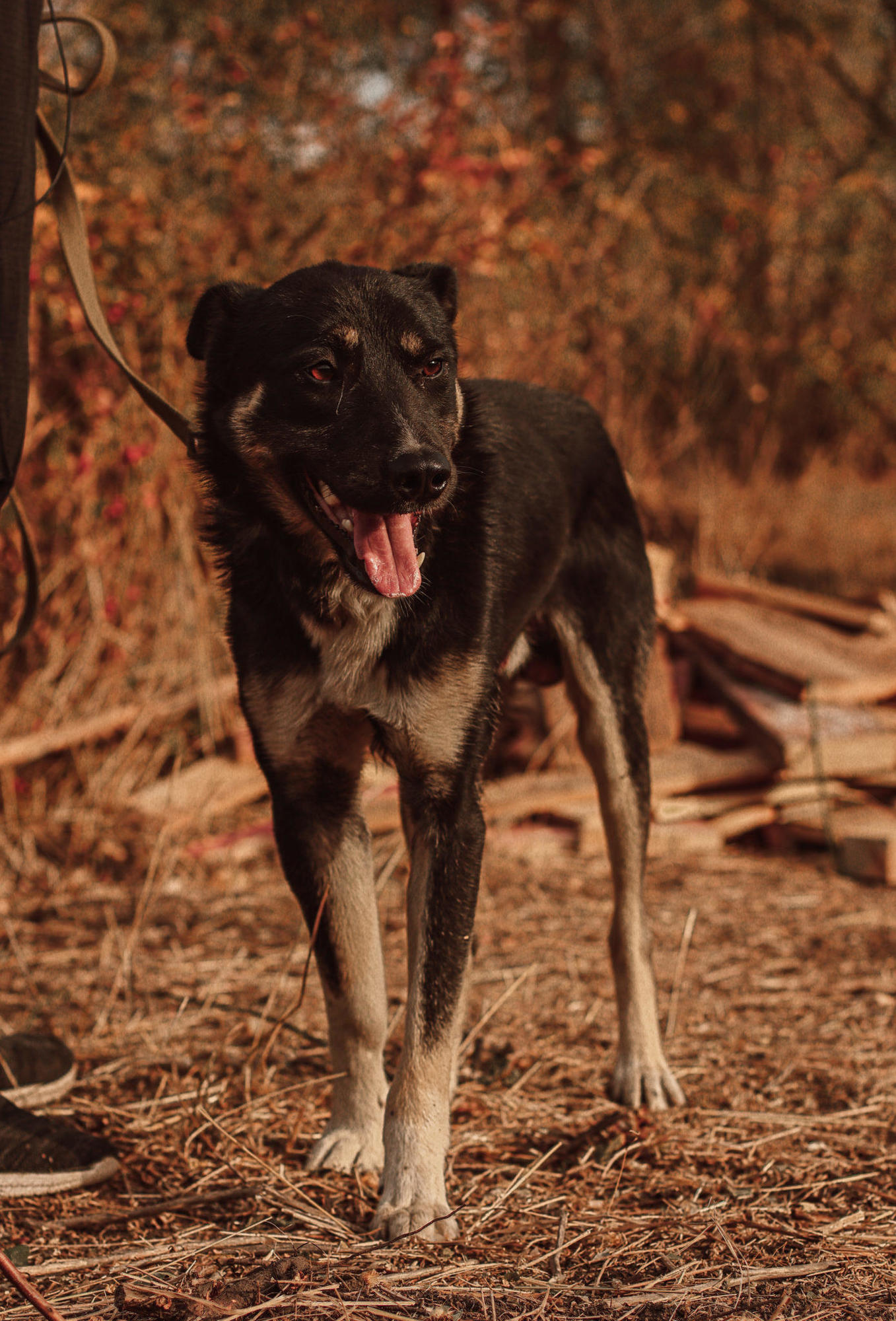 пес кобель безпритульний з Луганщини