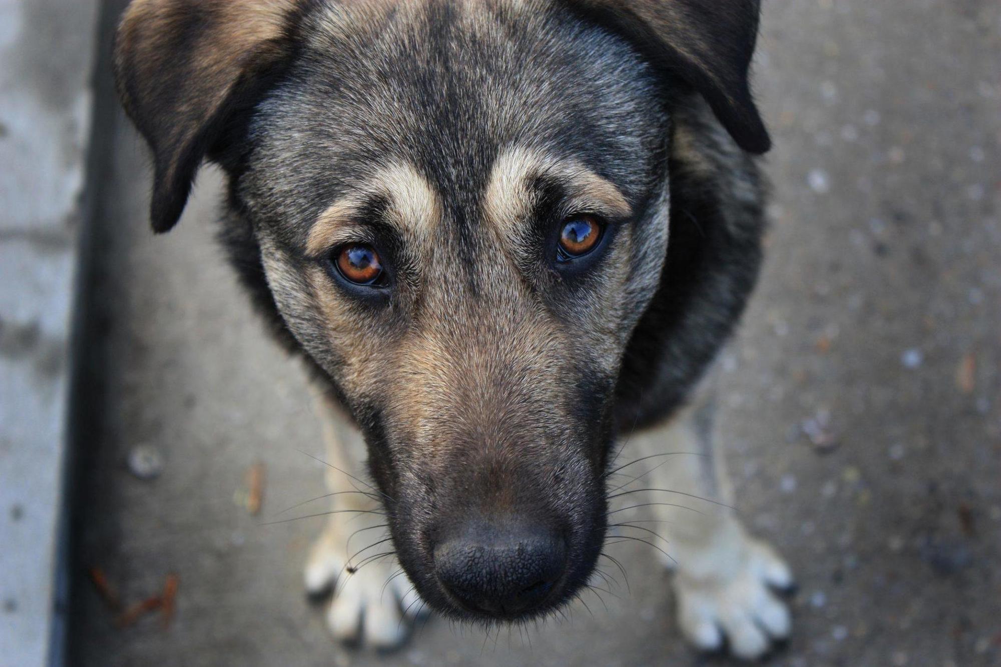 На Донеччині чоловіку, який вбив безпритульного собаку, дали рік тюрми з випробувальним періодом
