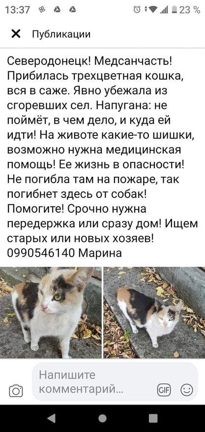 пост зоозахисників Луганщини