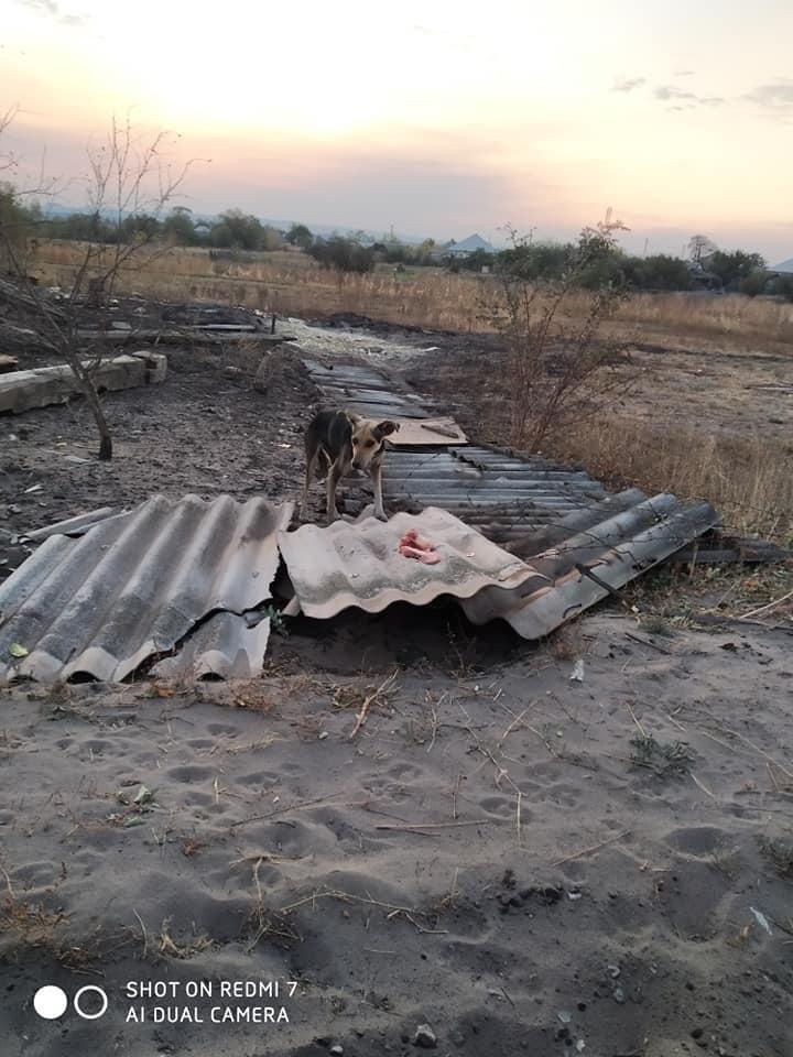 пожары Луганская область животные