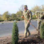 В Соледарі посадили 26 дерев в пам'ять про загиблих в авіакатастрофі під Чугуєвом