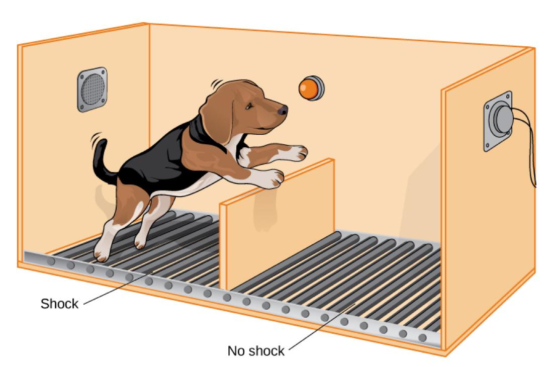 собака експеримент Селігмана