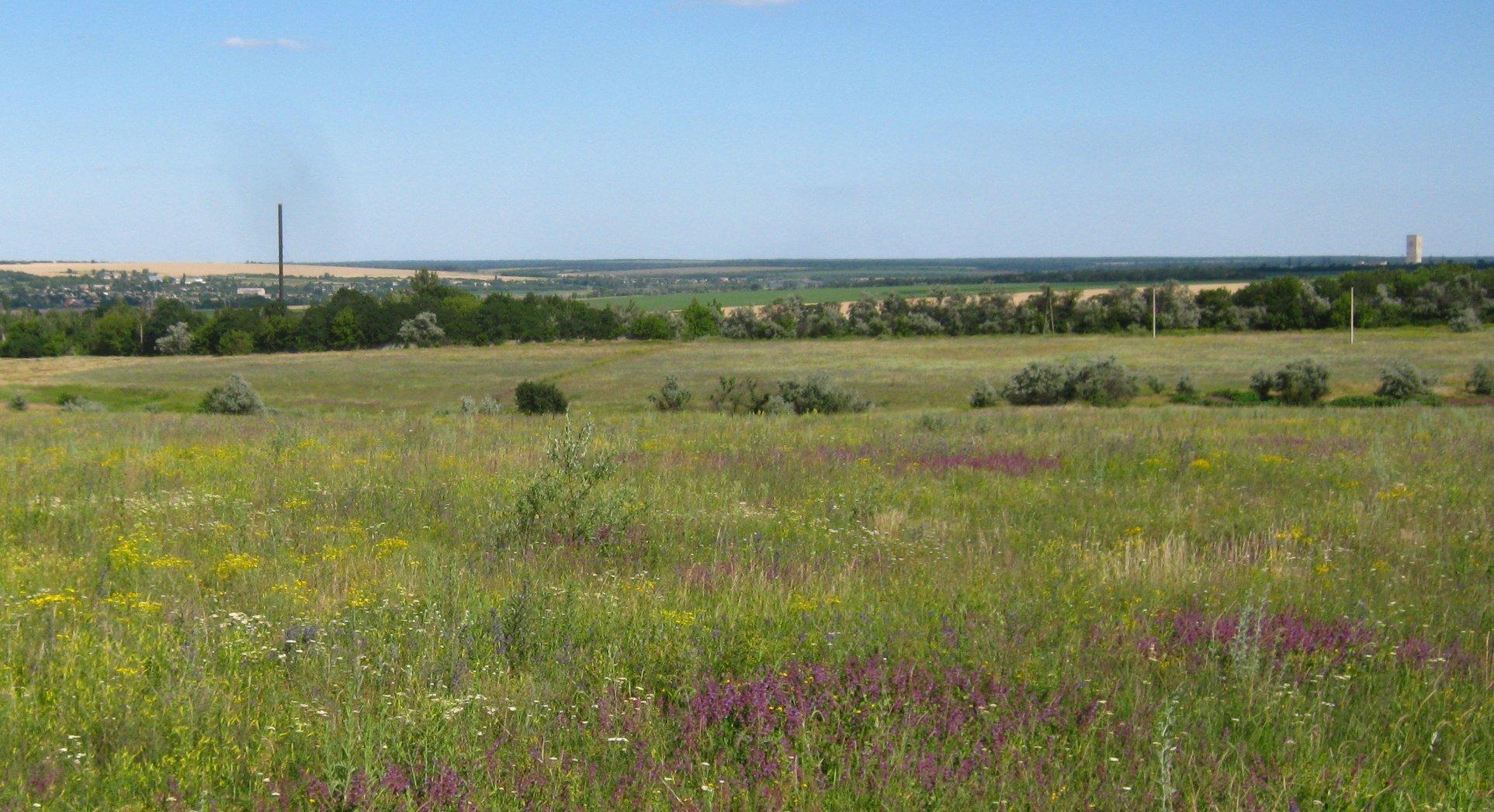 степ зелена трава дика рослинність природний ландшафт
