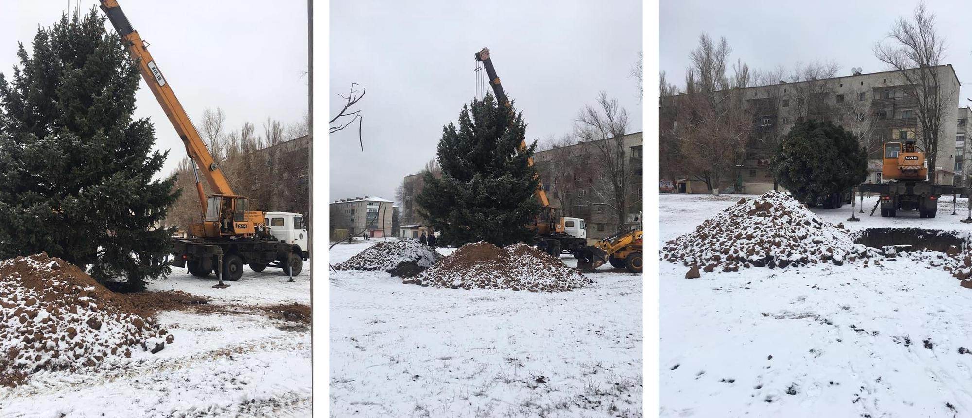 У Сіверську пересадили велику ялинку з околиці в центр міста