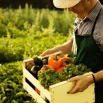 Мешканців Донеччини запрошують повчитися фермерства онлайн
