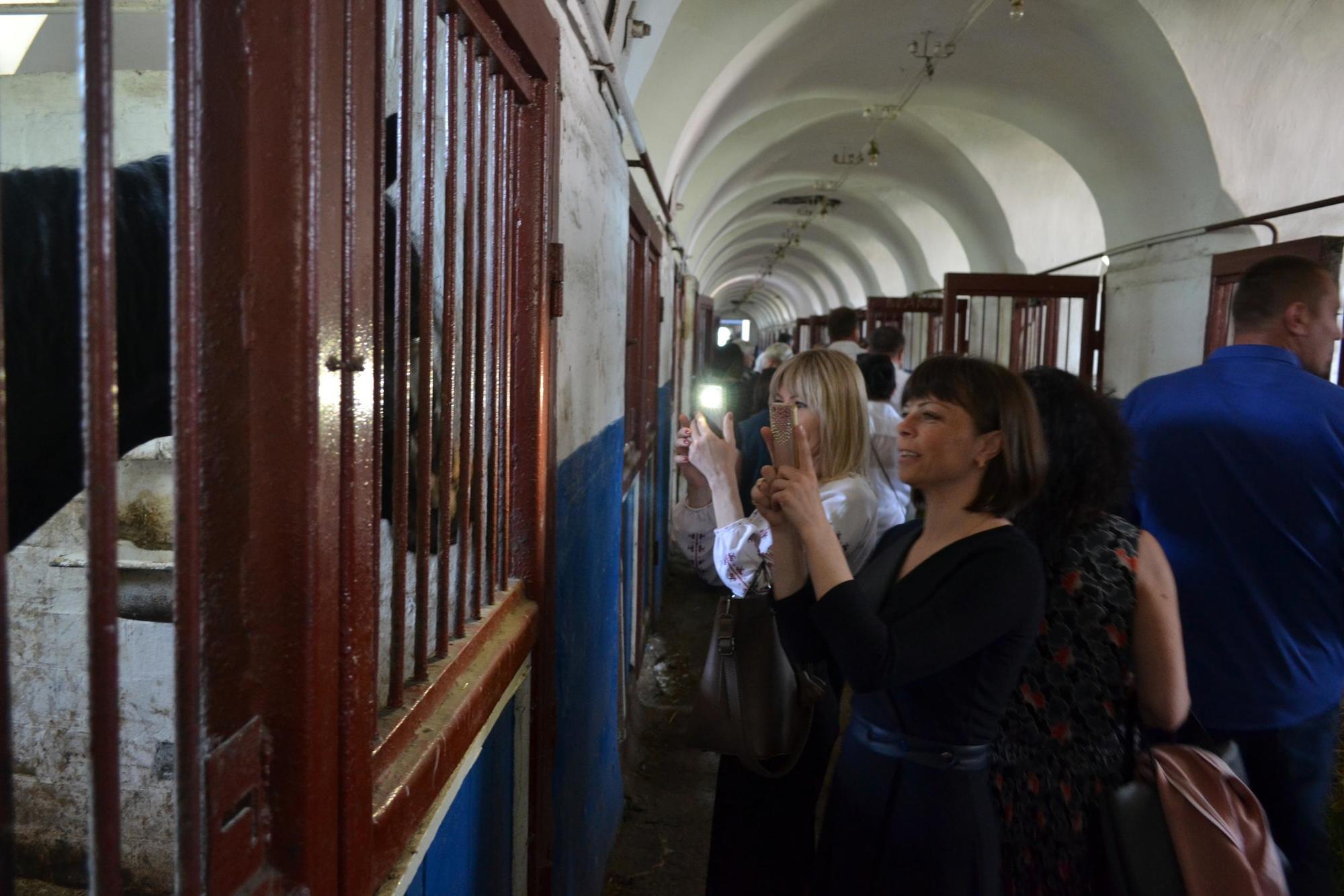 люди фотографують коней на Деркульському кінному заводі