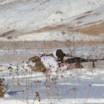 Доба в зоні ООС: окупанти стріляли біля Пісків та на півдні Донеччини, на Луганщині було спокійно