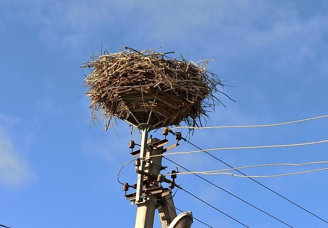 искусственная платформа под гнездом аиста на Донетчине