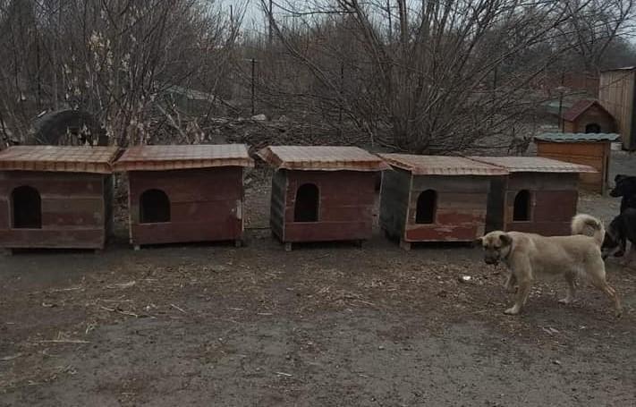Житло потрібне усім: жителі Слов'янська зробили будки для безпритульних собак з підручних матеріалів (ФОТО)