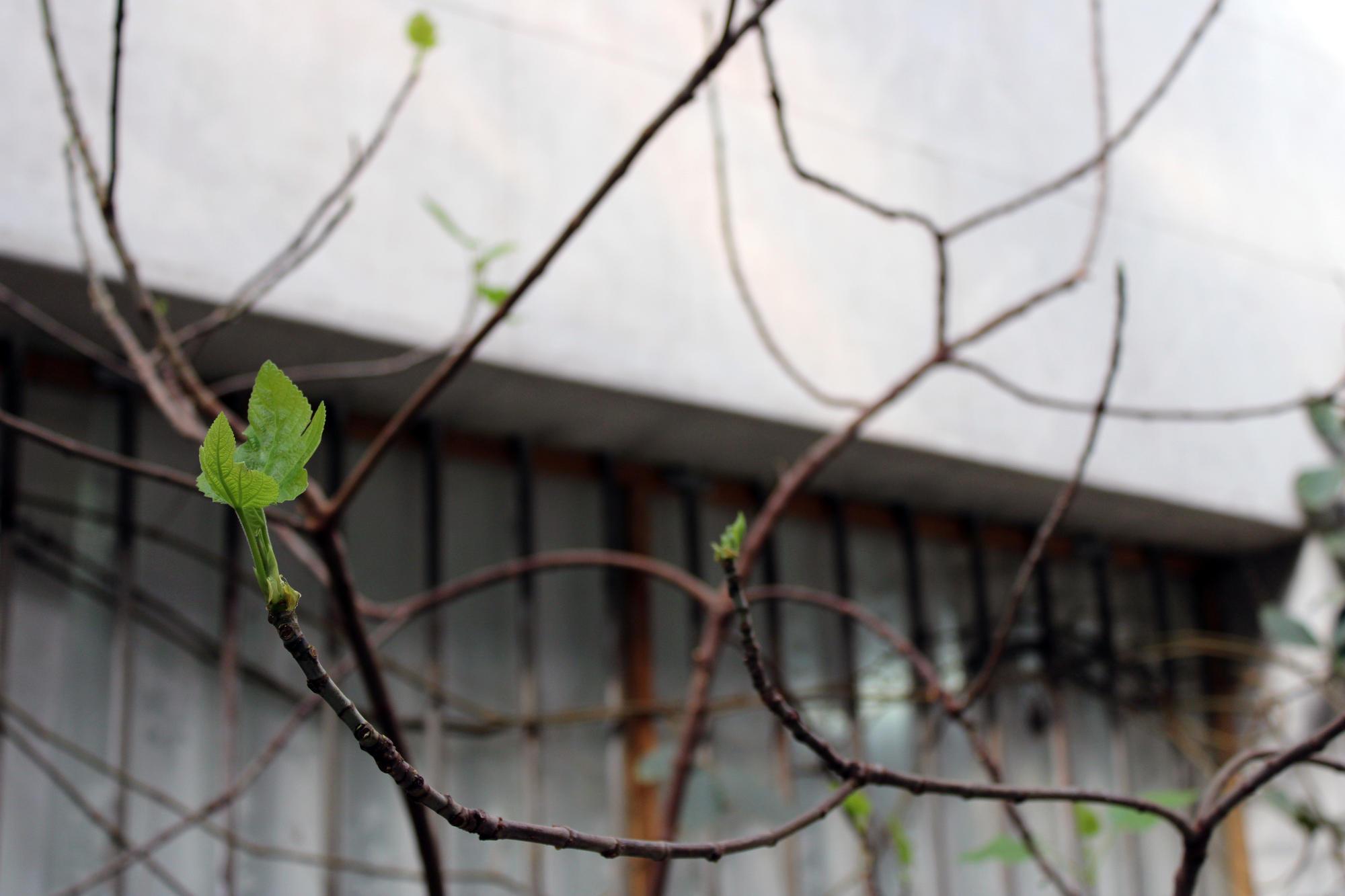 У Торецькому зимовому саду ростуть пальми та інжирні дерева