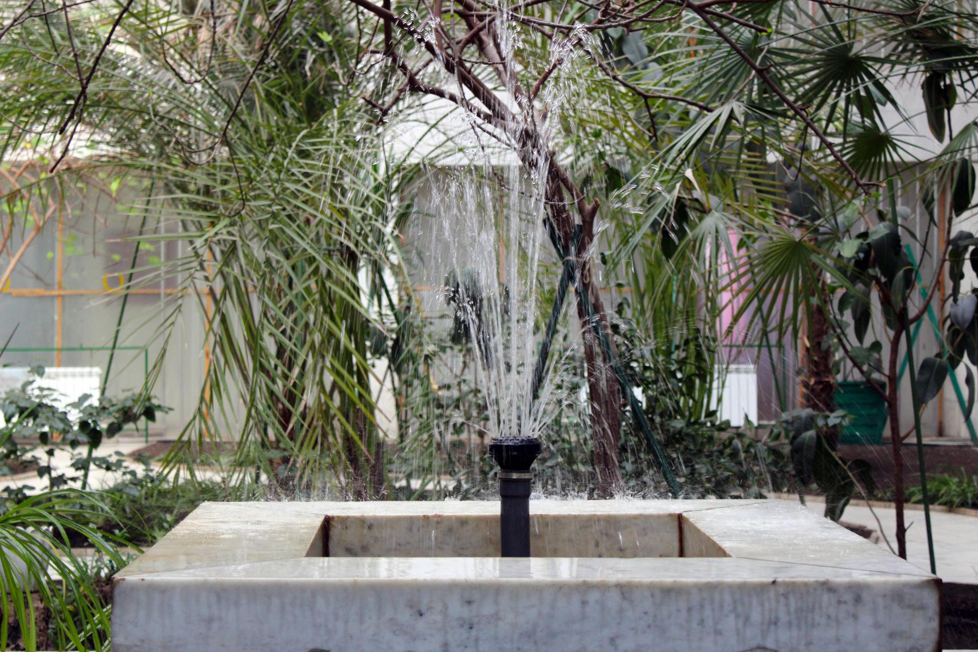 У Торецьку є зимовий сад з екзотичними рослинами