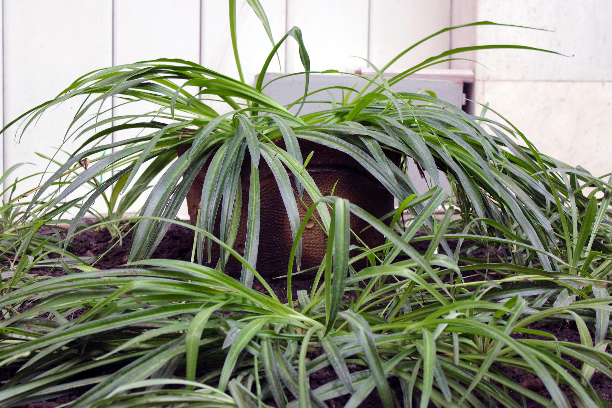 Рослини торецького зимового саду