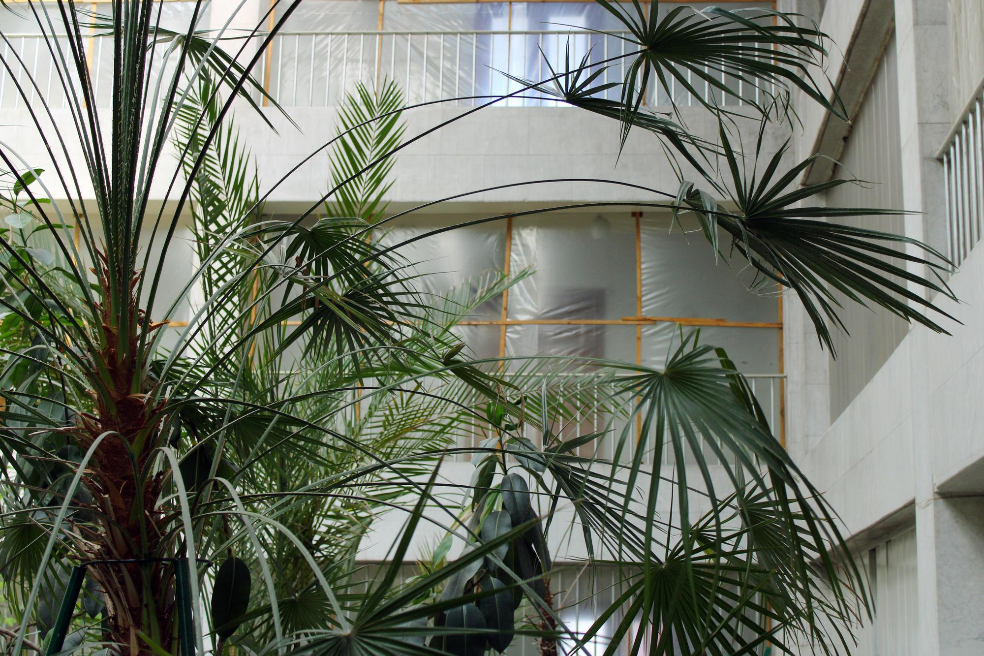 Кактуси, пальми та інші рослини торецього зимового саду