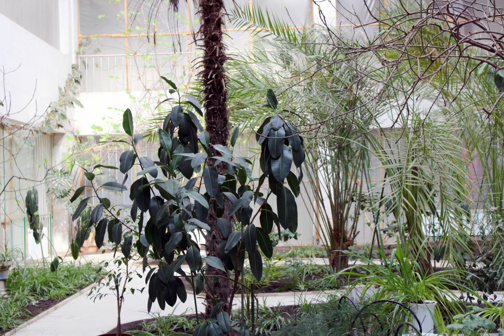 У Торецьку є зимовий сад, де ростуть екзотичні рослини
