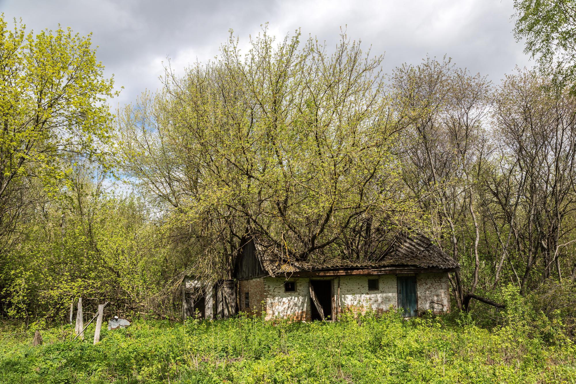 заброшенное жилье в Чернобыльской зоне отчуждения