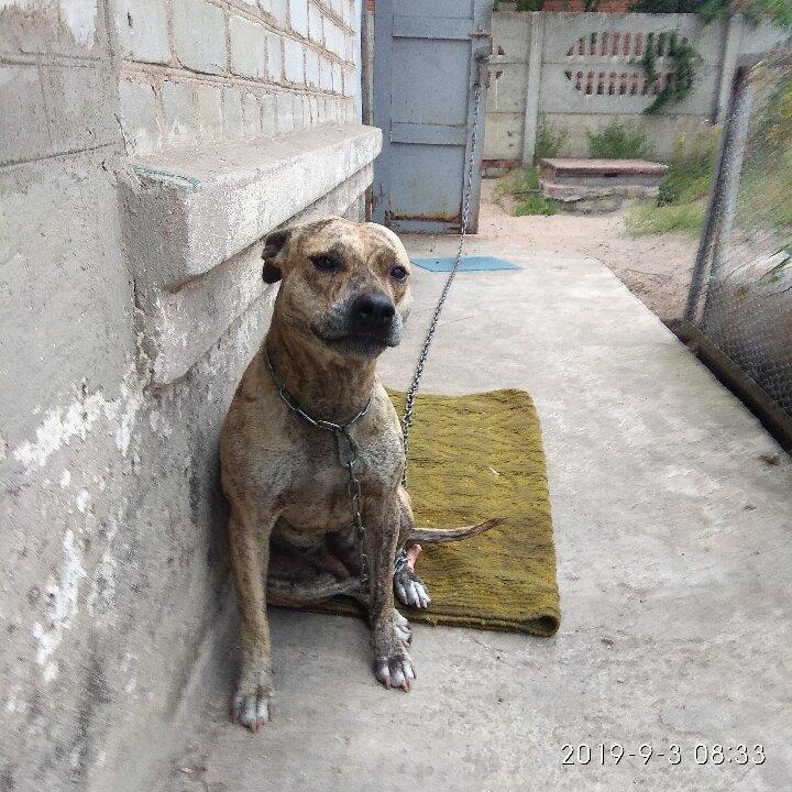 В Лимане за долги хозяина пострадала собака