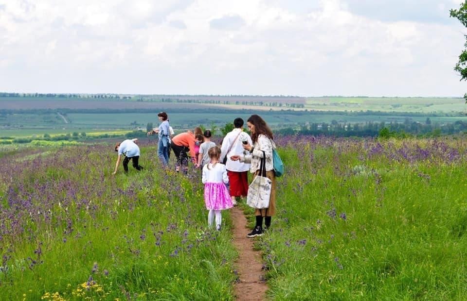 сбор степных трав на Юрчиной горе в Соледаре